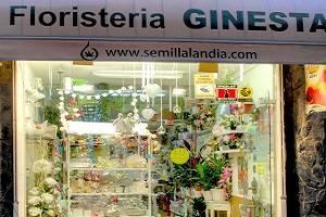FLORISTERIA GINESTA