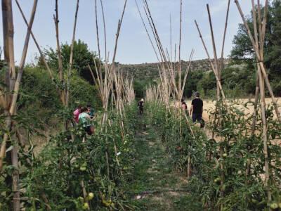 Acció Climàtica aposta per la conservació de les varietats locals agrícoles