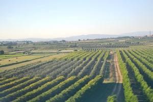 Convocats els ajuts al Pla d'arrencades de fruita de pinyol per al període 2019-2020
