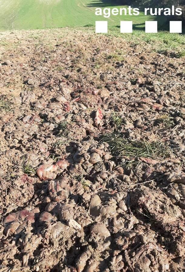 Apareixen restes càrnies en una finca de la Noguera