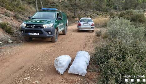 Denunciats per recollir pinyes sense permís a Os de Balaguer