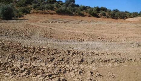 Denúncies a la Noguera per destrossar zones forestals