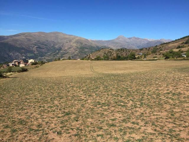 La ramaderia extensiva del Pirineu perd un 20% de capacitat econòmica per culpa de la sequera extrema