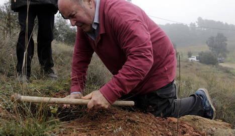 Planten unes tres-centes alzines a la Noguera