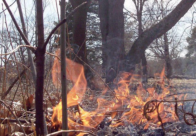 A partir d'avui comença la prohibició de fer foc al bosc