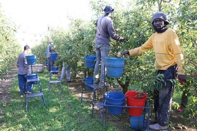 Agricultura efectua el pagament dels ajuts directes de la PAC