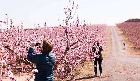 Aitona estudiarà amb els veïns com explotar el turisme floral