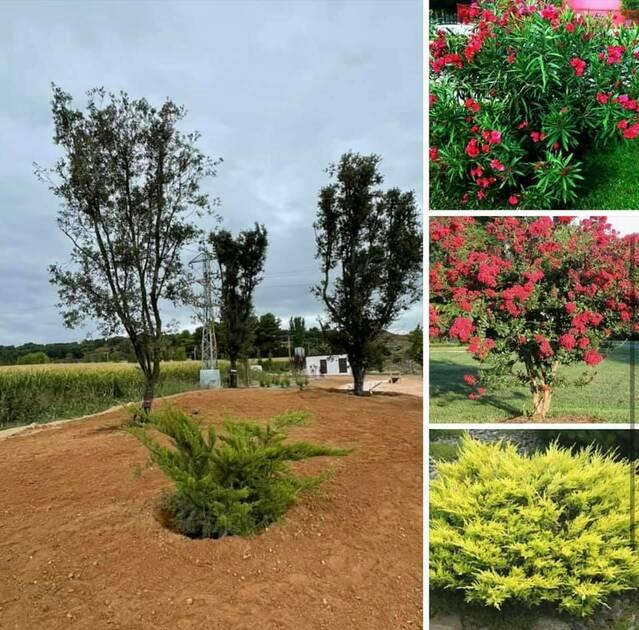 Almacelles estrena una nova zona verda prop del Parc d'Europa: el Bosquet d'Atenea