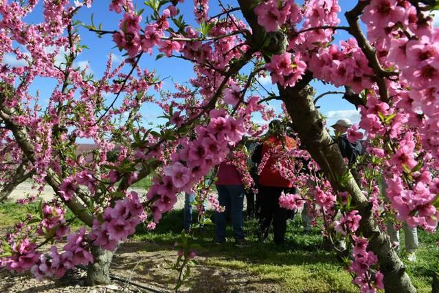Arrenca la temporada turística a Aitona amb un èxit sense precedents
