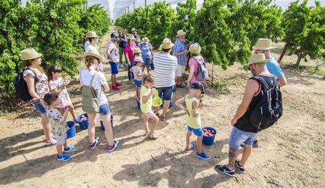 Cinc famílies recullen nectarines i paraguaians al Baix Segre