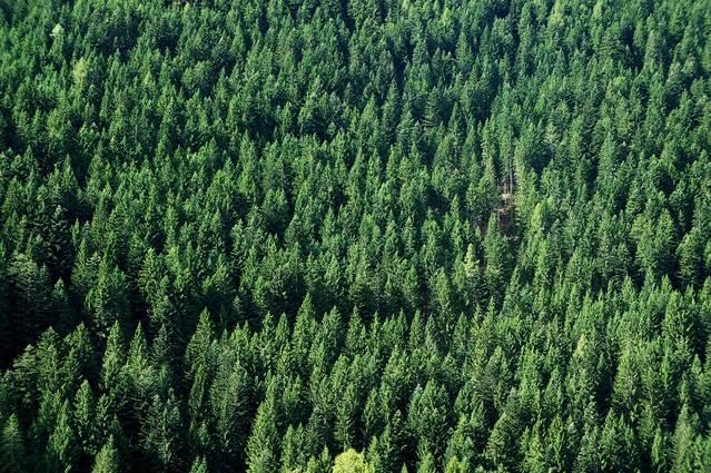 Comença la prohibició de focs al bosc