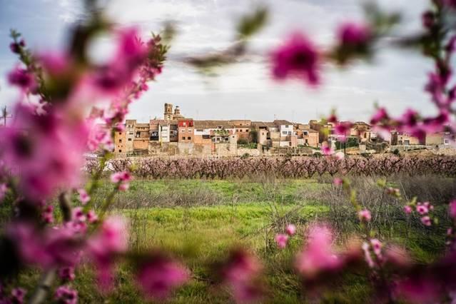 El concurs de fotografia 'Massalcoreig en Flor' ja té guanyador i guanyadores