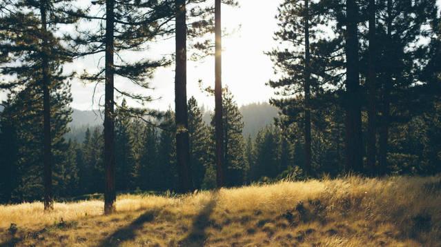 El Govern incrementa els recursos i dotacions per fer front a la campanya forestal que comença dilluns