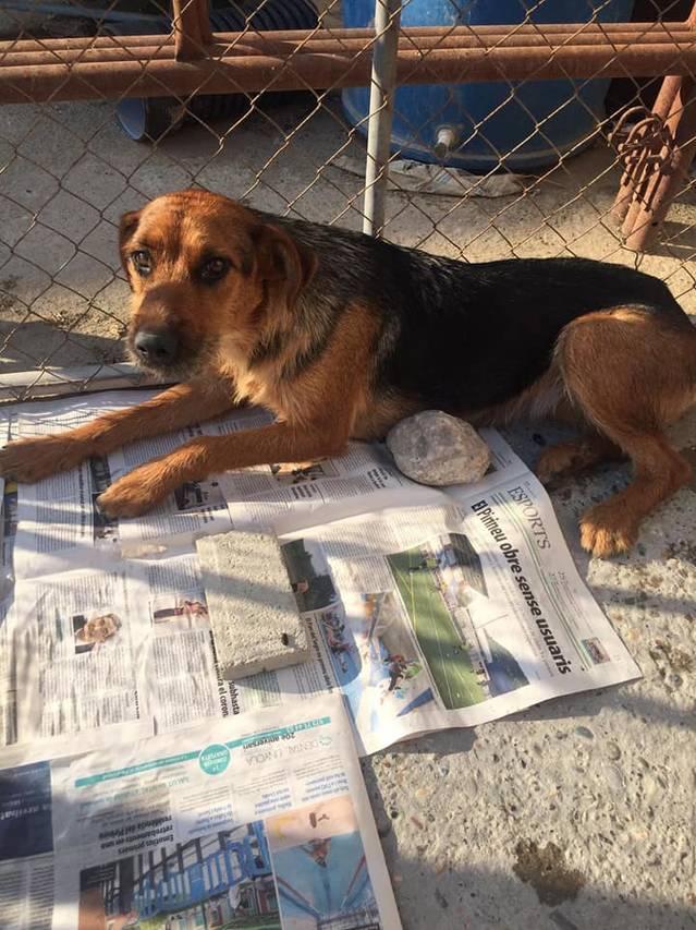 Els Bombers d'Almenar rescaten dos gossos que s'ofegaven al canal de Pinyana