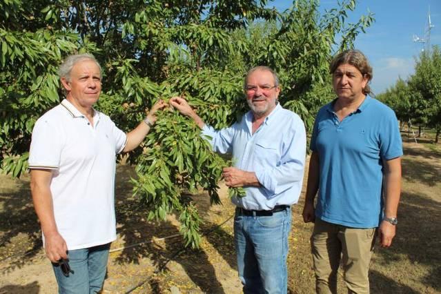 La Diputació organitza dimecres una jornada a Maials sobre el cultiu de l'ametller en regadiu