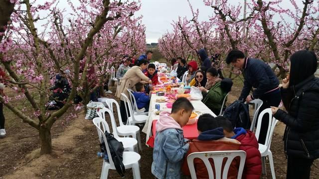 La festa del Hanami arriba a Aitona