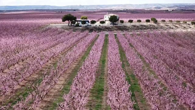 La Generalitat atorga el premi a la millor experiència turística a la ruta de la flor del presseguer