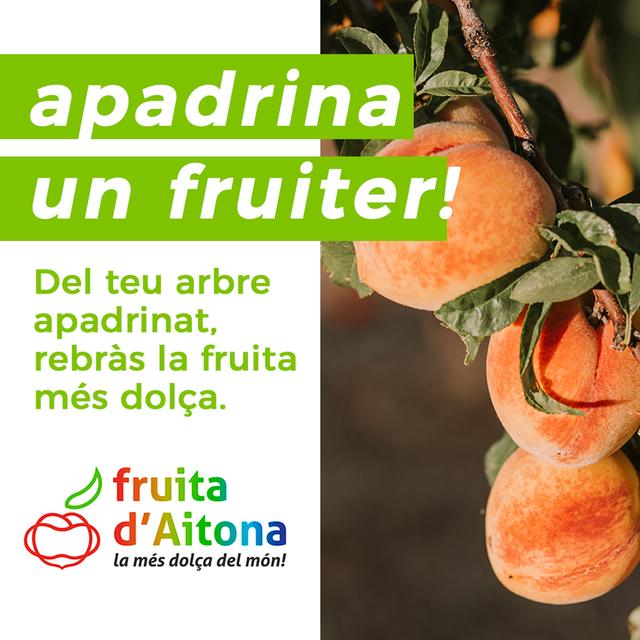 L'Ajuntament d'Aitona reactiva el projecte 'Apadrina un fruiter'