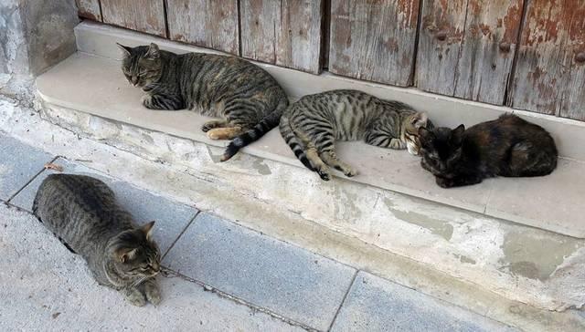 L'Ajuntament d'Alcoletge esterilitzarà els gats abandonats del poble