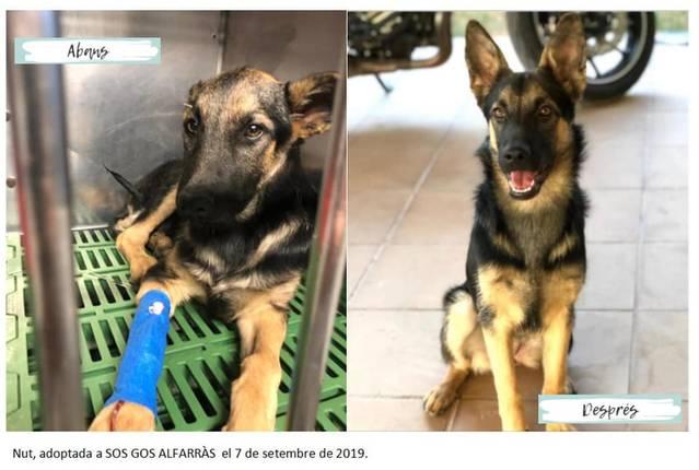 L'Ajuntament d'Alfarràs s'implica en el Dia Internacional de l'animal sense llar