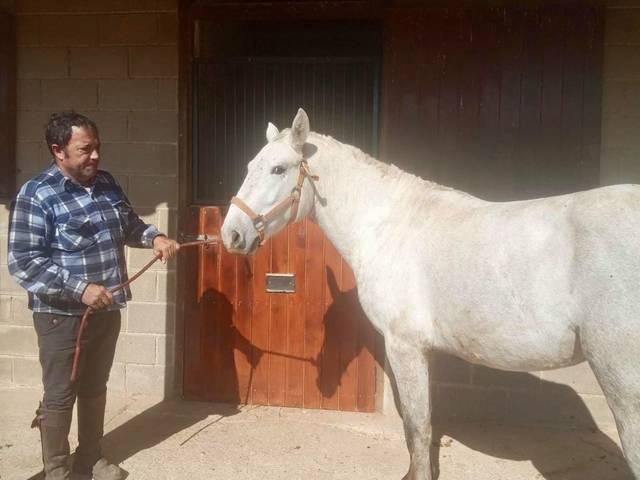 L'Ajuntament de Torres de Segre lliura sis cavalls perquè ajudin a curar persones