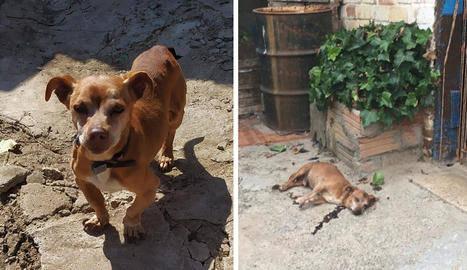 Maten a trets un gos a Almenar perquè els molestaven els seus lladrucs