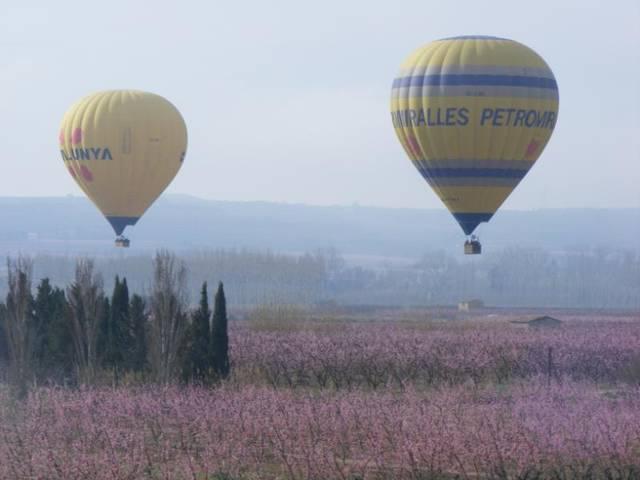 Més de 15.000 visitants als camps florits d'Aitona