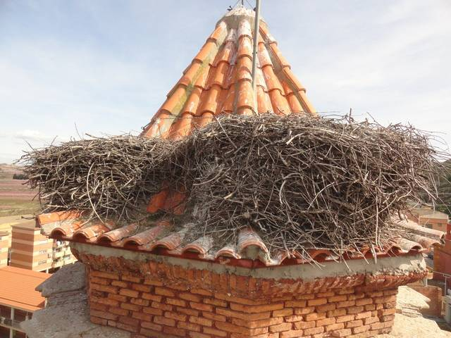 Treballs d'adequació dels nius de cigonyes al campanar de l'Església de Sant Jaume de la Granja d'Escarp