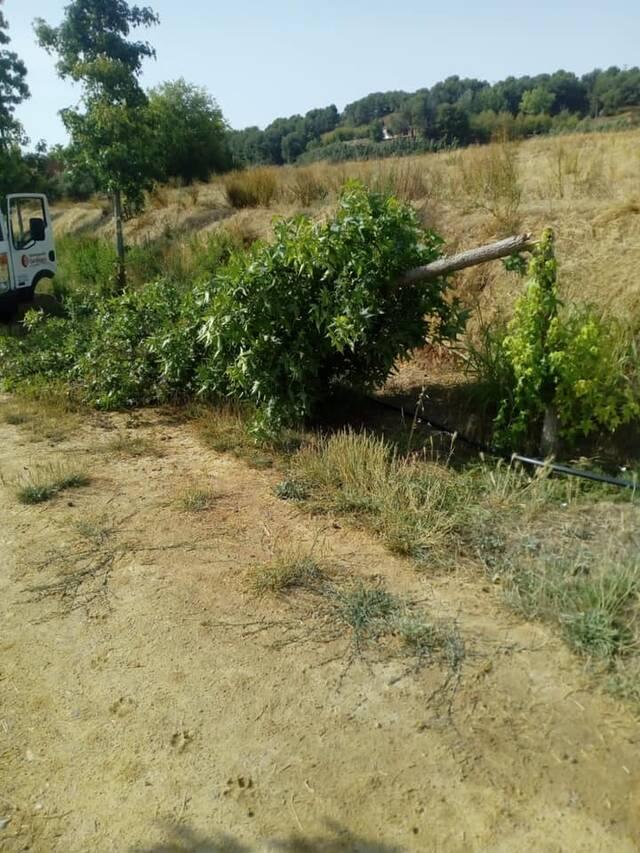 Trenquen arbres a l'Avinguda Josep Mas Dordal d'Almacelles